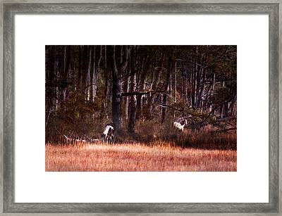In Search Of Adventure Framed Print by Jillian  Chilson