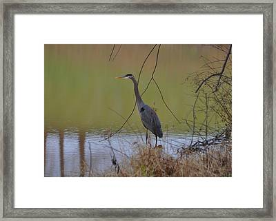 In Search Of Breakfast - C9509c Framed Print by Paul Lyndon Phillips