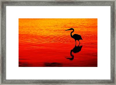 In Search Of Gold Framed Print