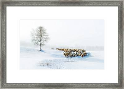 In Snow Framed Print