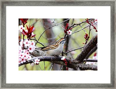 Framed Print featuring the photograph In Song by Trina  Ansel