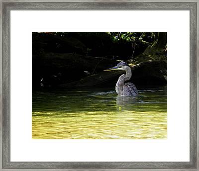 In The Bath Framed Print by Judy Wanamaker