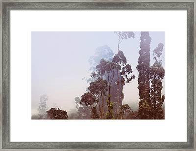 In The Blue Silence. Nuwara Eliya Framed Print by Jenny Rainbow