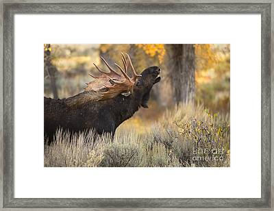 In The Breeze Framed Print by Aaron Whittemore