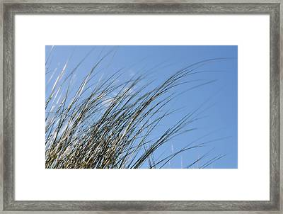 In The Breeze - Soft Grasses By Sharon Cummings Framed Print