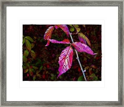 Framed Print featuring the photograph In The Briar Patch by Judi Bagwell