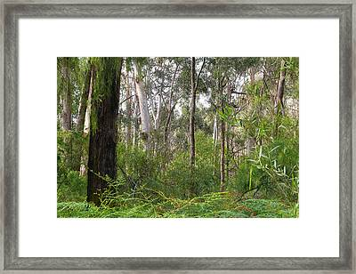 Framed Print featuring the photograph In The Bush by Evelyn Tambour