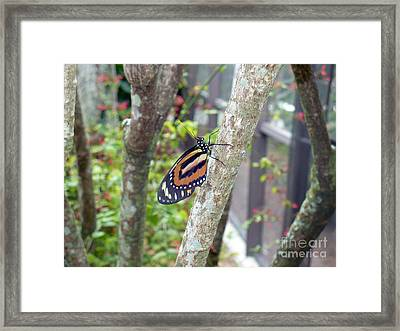 In The Bush Framed Print by Kryztina Spence