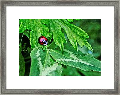 In The Clover Framed Print by JC Findley