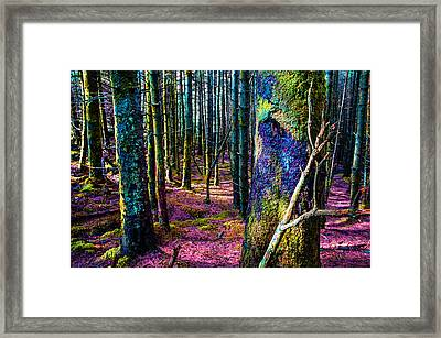 In The Colorful Wood. Rest And Be Thankful. Scotland Framed Print by Jenny Rainbow