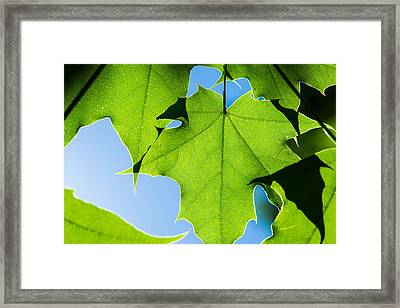 In The Cooling Shade - Featured 3 Framed Print