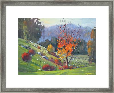 In The Cow Pasture Framed Print