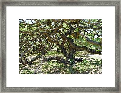 In The Depth Of Enchanting Forest I Framed Print by Jenny Rainbow
