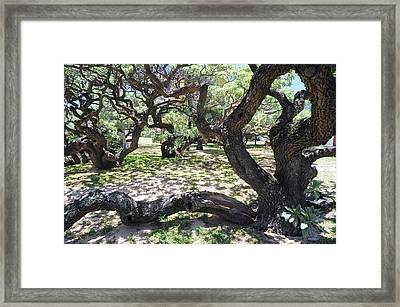 In The Depth Of Enchanting Forest V Framed Print by Jenny Rainbow
