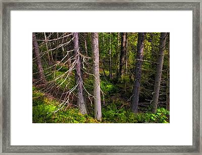 In The Depth Of Northern Forest Framed Print by Jenny Rainbow