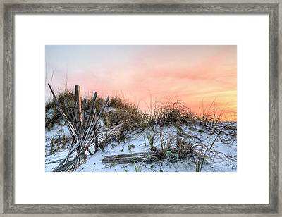 In The Dunes Of Pensacola Beach Framed Print