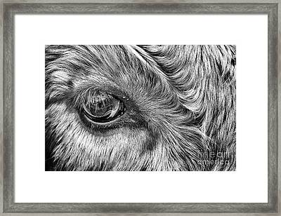 In The Eye Framed Print by John Farnan