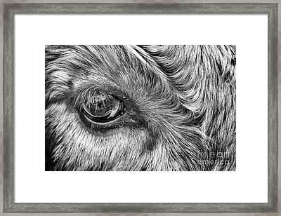 In The Eye Framed Print