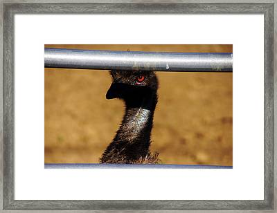 In The Eye Of The Emu Framed Print by Michael Courtney