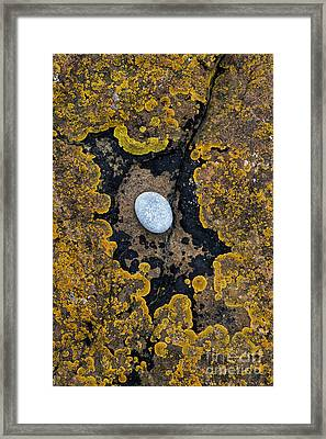 In The Eye Of The Stone  Framed Print by Tim Gainey