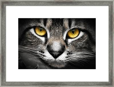 In The Eyes Of A Cat Framed Print by Irma Mason