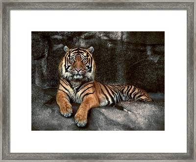 In The Eyes Of The Tiger Framed Print by Joachim G Pinkawa