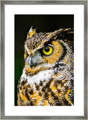 In The Eyes Framed Print by Parker Cunningham