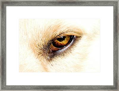Framed Print featuring the photograph In The Eyes.... by Rod Wiens