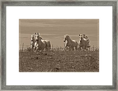 In The Field Framed Print by Wes and Dotty Weber