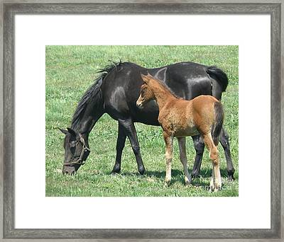 Framed Print featuring the photograph In The Field by Debby Pueschel