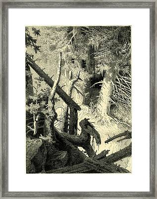 In The Fine Forest Switzerland Framed Print