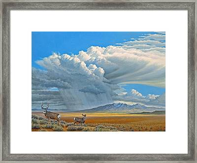 In The Foothills-mule Deer Framed Print by Paul Krapf