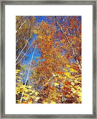 In The Forest At Fall Framed Print