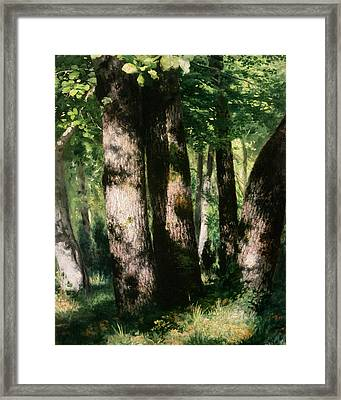 In The Forest Of Fontainebleau Framed Print by Pierre Auguste Renoir