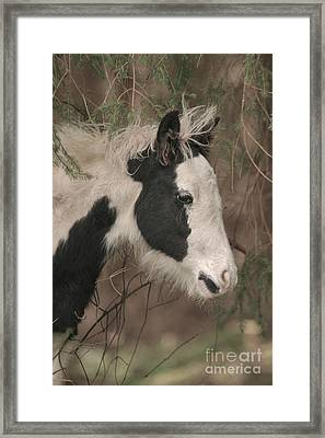 In The Forest Framed Print by Szalonaisa Photography