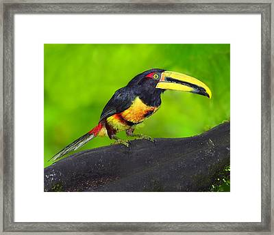 In The Forest Framed Print by Tony Beck