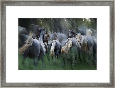In The Gallop Framed Print by Milan Malovrh