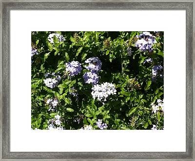 Framed Print featuring the photograph In The Garden by Alohi Fujimoto