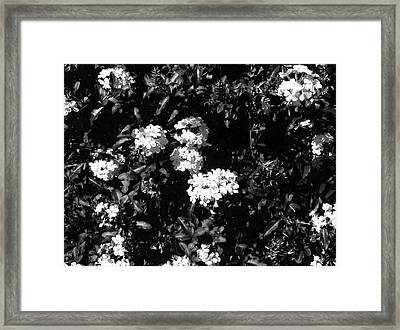 Framed Print featuring the photograph In The Garden- Black And White by Alohi Fujimoto