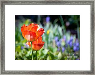 In The Garden Framed Print by Kerri Farley
