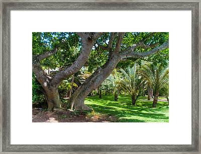 In The Garden. Mauritius Framed Print by Jenny Rainbow