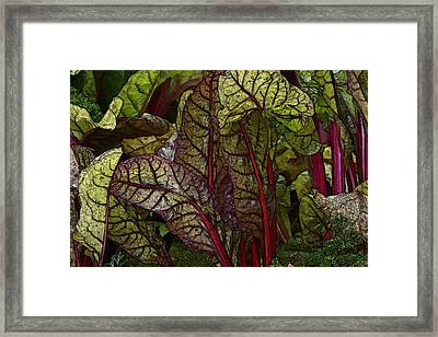 In The Garden - Red Chard Jungle Framed Print