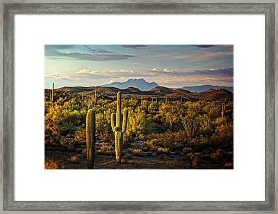 In The Golden Hour  Framed Print by Saija  Lehtonen