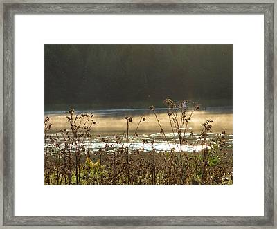 In The Golden Light Framed Print by Mary Wolf