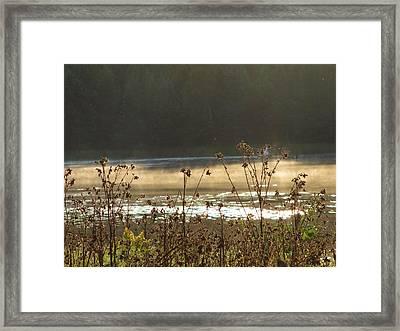 In The Golden Light Framed Print