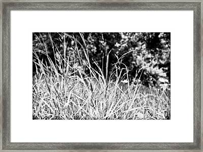 In The Grass Framed Print by Andrew Raby
