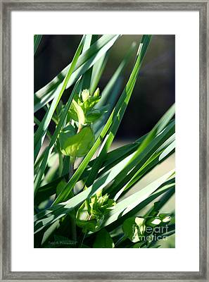 Framed Print featuring the photograph In The Grass by Todd Blanchard