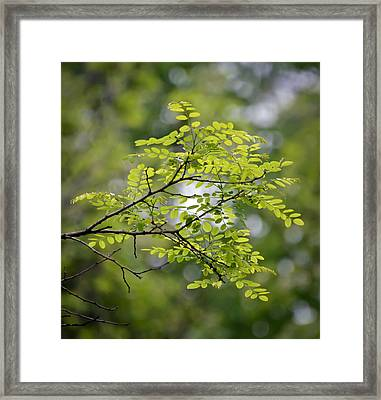 In The Green Framed Print by Kerri Farley