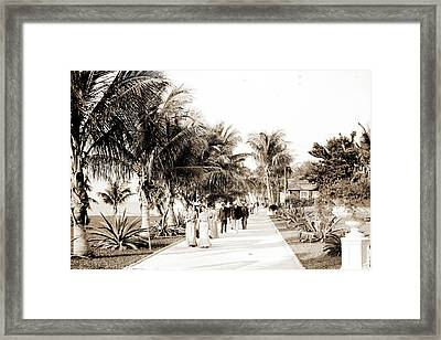 In The Grounds Of The Royal Poinciana, Palm Beach, Fla Framed Print by Litz Collection