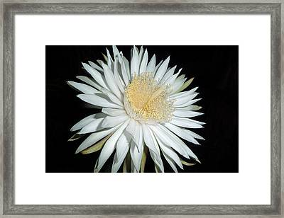 In The Heat Of The Night Framed Print by Cindy McDaniel